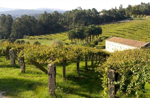 escapada turismo del vino